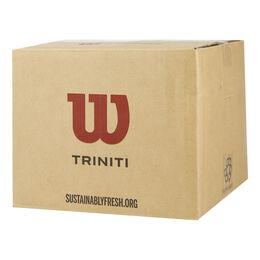 TRINITI CLUB 36 TBALL Special Edition